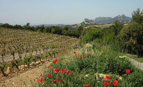 Lirac – Secret gem of Rhone Valley