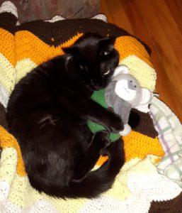 casper-the-cat-holly-harris